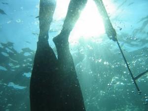 Les règles de la chasse ou pêche sous marine