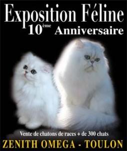 Exposition féline à Toulon le 17 et 18 octobre