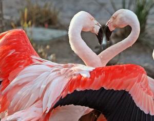 Réussir la Saint Valentin à Toulon