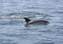 Vidéo de dauphins dans la baie de Tamaris
